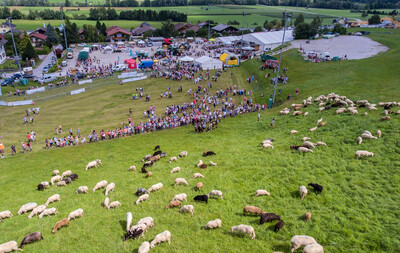 Twelfth Styrian Alpine Lamb Festival on 28th July 2019